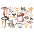 edible mushrooms collection hand drawn foo vector image vector image