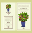 fuchsia flower in pot banners vector image vector image