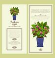 Fuchsia flower in pot banners