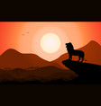 silhouette king lion african nature vector image vector image