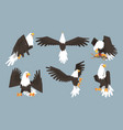 collection bald eagles in various poses pride vector image