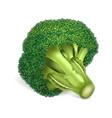 eco broccoli icon realistic style vector image