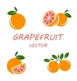 flat grapefruit icons set vector image