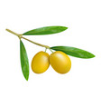 branch of olives icon realistic style vector image