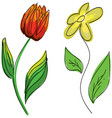 drawn colored flowers vector image vector image
