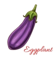Eggplant vegetable sketch isolated icon vector image vector image