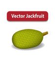 raw green jackfruit isolated on white vector image