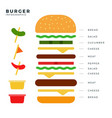 burger info-graphic vector image vector image