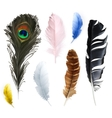 Feathers icons vector image