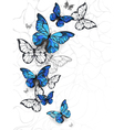 Flying Butterflies Morpho vector image