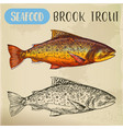 sketch of brook trout or squaretail seafood fish vector image vector image