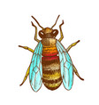 color striped bee flying insect animal top view vector image vector image