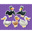 Different color of ducks vector image
