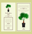 greeting card with washingtonia plant vector image vector image