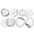 Hazelnut on white background Isolated nuts vector image vector image