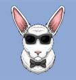 rabbit eyeglasses vector image