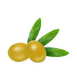 fresh olives icon realistic style vector image vector image