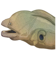 Giant moray eel head vector image vector image