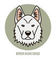 portrait of berger blanc suisse vector image vector image