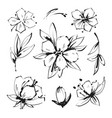 sketch floral botany collection magnolia flower vector image