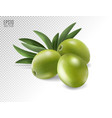 green olives and leaves isolated on transparent vector image