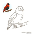 Northern red bishop color book vector image vector image
