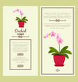orchid flower in pot banners vector image vector image