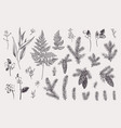 set with winter plants vector image