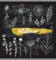 collection of hand drawn wild flowers vector image