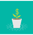 dollar plant in pot vector image vector image