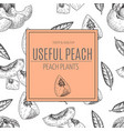 hand drawn sketch style seamless peach vector image