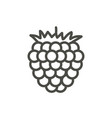 raspberry icon outline berry line fruit s vector image vector image