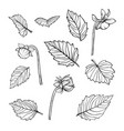 set beautiful black and white dahlia leaves vector image