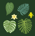 tropical leaves summer green exotic jungle palm vector image vector image