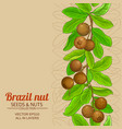 brazil nut branches pattern on color background vector image