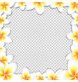 frangipani frame vector image