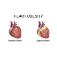 obesity heart vector image vector image