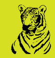 tiger on yellow background vector image