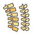 backbone spine chiropractic backache bone vector image