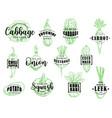 organic natural vegetables lettering vector image