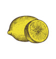 ripe lemon hand drawn isolated icon vector image