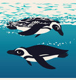 two penguins floating in sea water antarctic vector image