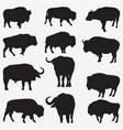 buffalo silhouettes vector image vector image