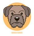 portrait of border terrier vector image vector image