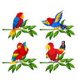 set of parrot on tree branch vector image