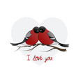 two bullfinch birds huddled vector image