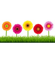 gerbers and grass border vector image vector image
