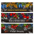 sketch banners of farm and forest berries vector image vector image