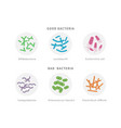 good and bad bacterial flora icon set isolated on vector image
