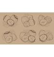 Hazelnut on white background Isolated nuts vector image